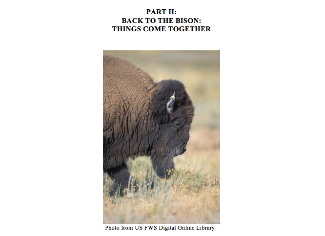 Back to the Bison Case Study Part II