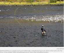 Tribes Recondition Steelhead to Bring Back Endangered Trout