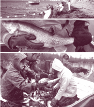 We Are the Stewards: Indigenous-Led Fisheries Innovation in North America