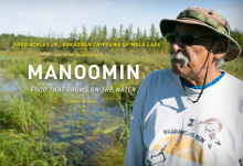Fred Ackley Jr. from Sokaogon Chippewa Community of Mole Lake harvesting manoomin, or wild rice.