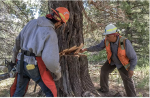 Partnerships and sustainability are key to developing tribal workforces