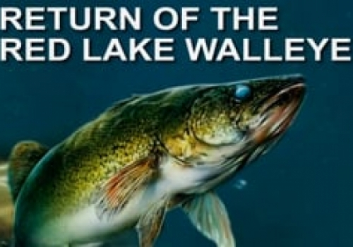 Return of the Red Lake Walleye - Trailer